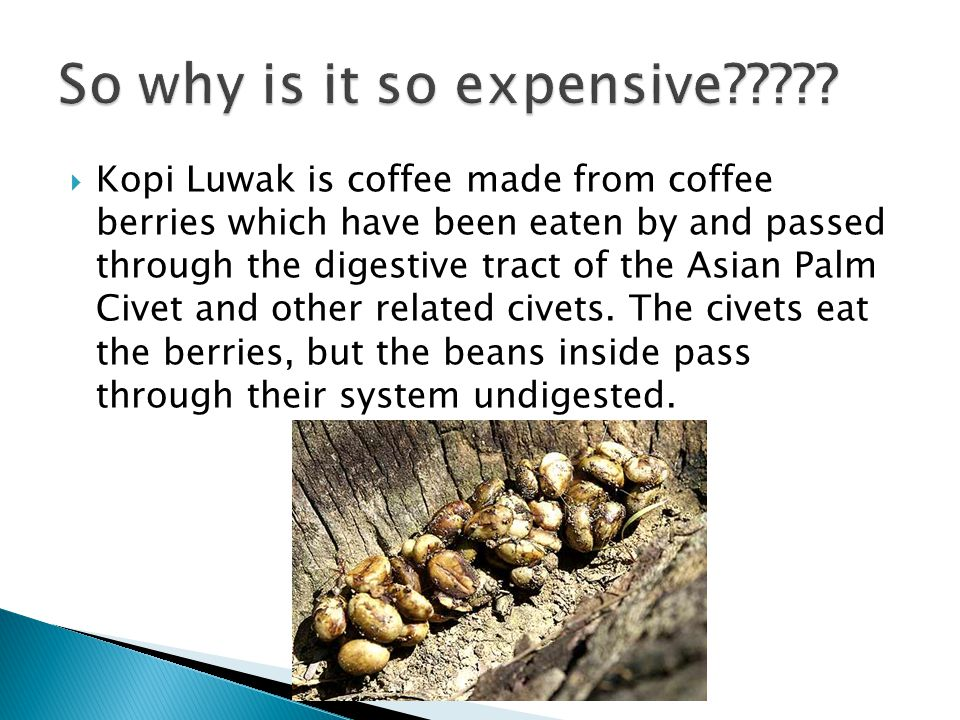 Kopi Luwak is coffee made from coffee berries which have been eaten by and passed through the digestive tract of the Asian Palm Civet and other related civets.