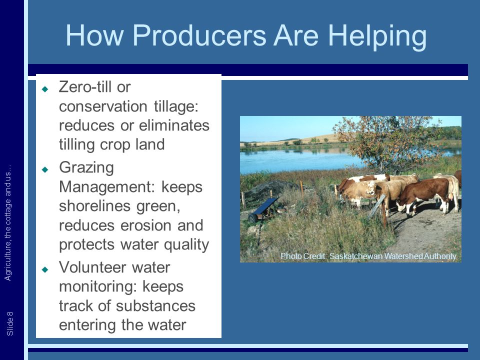 Agriculture, the cottage and us… Slide 8 How Producers Are Helping  Zero-till or conservation tillage: reduces or eliminates tilling crop land  Grazing Management: keeps shorelines green, reduces erosion and protects water quality  Volunteer water monitoring: keeps track of substances entering the water Photo Credit: Saskatchewan Watershed Authority