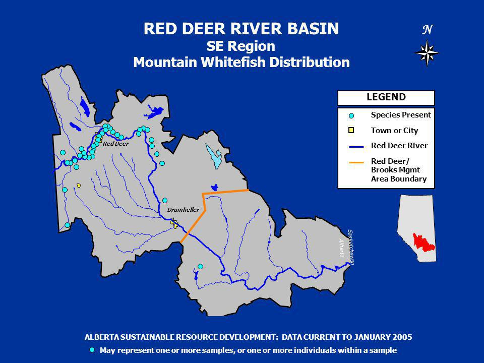 RED DEER RIVER BASIN SE Region Mountain Whitefish Distribution N Saskatchewan Alberta LEGEND Species Present Town or City Red Deer River Red Deer/ Brooks Mgmt Area Boundary ALBERTA SUSTAINABLE RESOURCE DEVELOPMENT: DATA CURRENT TO JANUARY 2005 May represent one or more samples, or one or more individuals within a sample Drumheller Red Deer