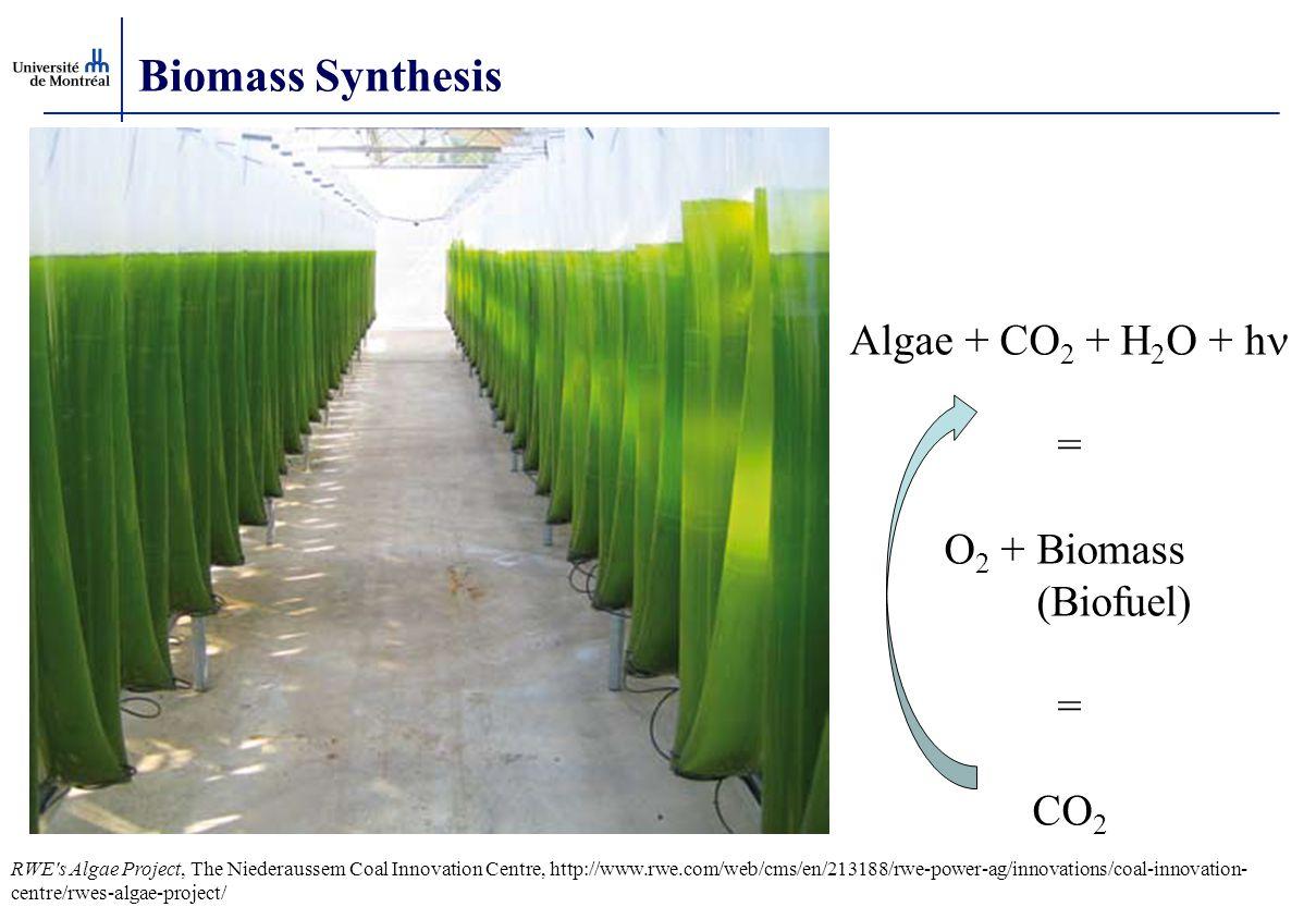 Biomass Synthesis Algae + CO 2 + H 2 O + h = O 2 + Biomass (Biofuel) = CO 2 RWE's Algae Project, The Niederaussem Coal Innovation Centre, http://www.r