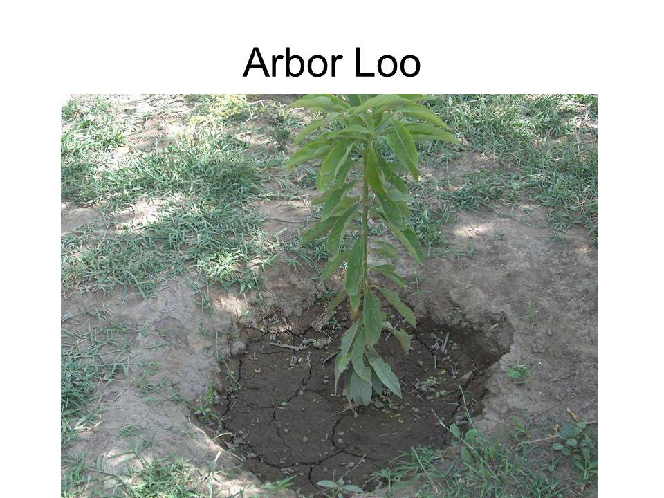 Arbor Loo