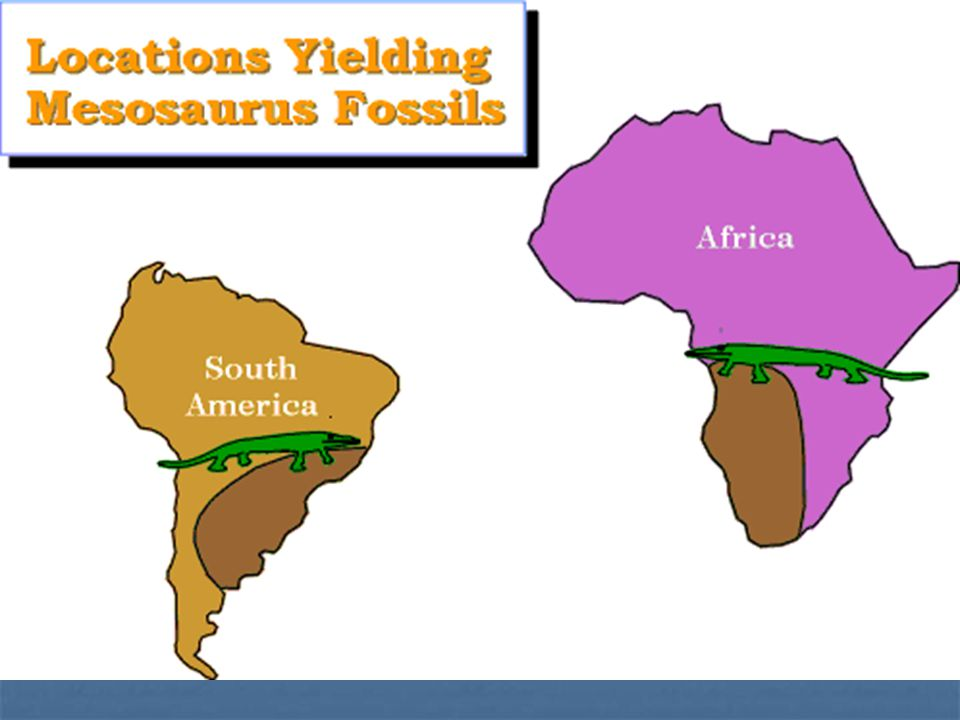 Several pieces of evidence support the theory of plate tectonics: Africa and South America were once part of a larger continent (called Pangaea) Afric