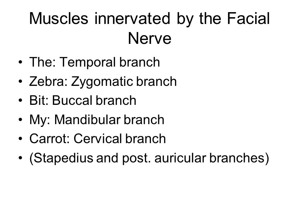 Muscles innervated by the Facial Nerve The: Temporal branch Zebra: Zygomatic branch Bit: Buccal branch My: Mandibular branch Carrot: Cervical branch (
