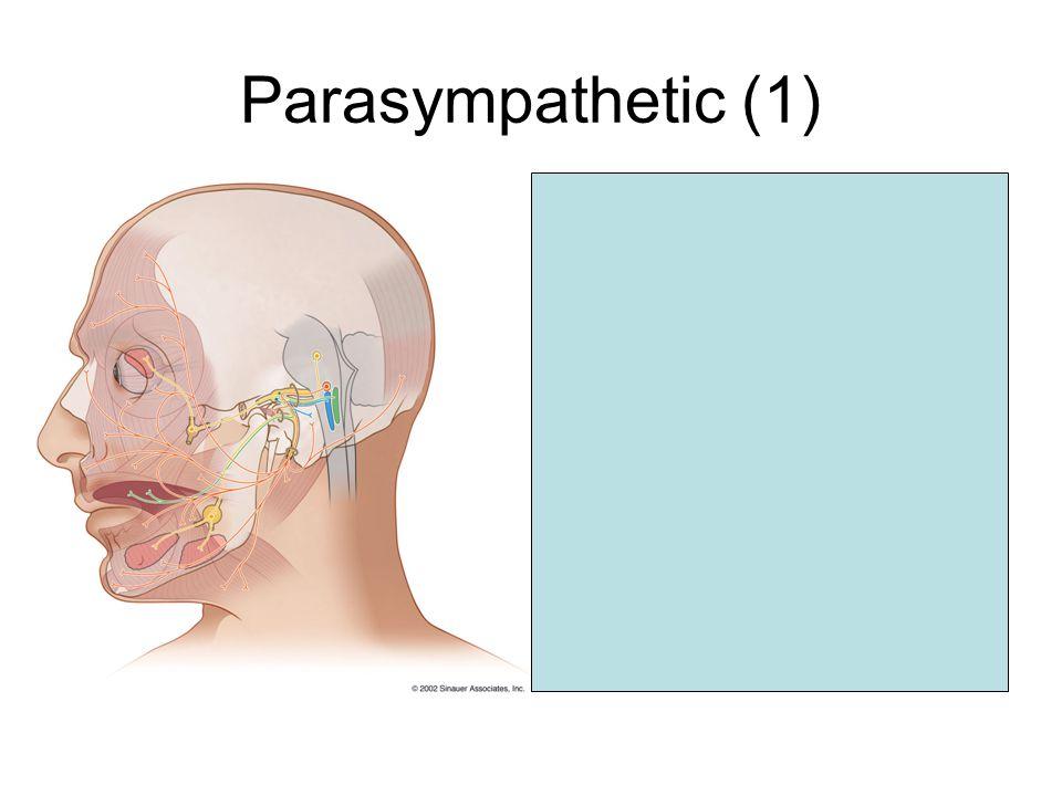 Parasympathetic (1) Superior salivatory nucleus GT petrosal nerve leaves genu Reach the sphenopalatine ganglion post-ganglionic fibers  lacrimal glan