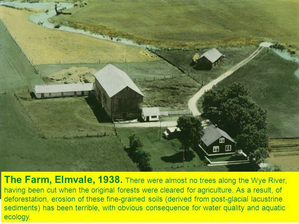 The Farm, Elmvale, 1938.