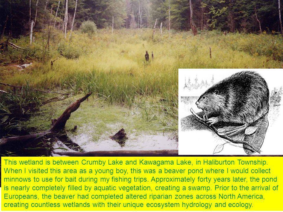 This wetland is between Crumby Lake and Kawagama Lake, in Haliburton Township.