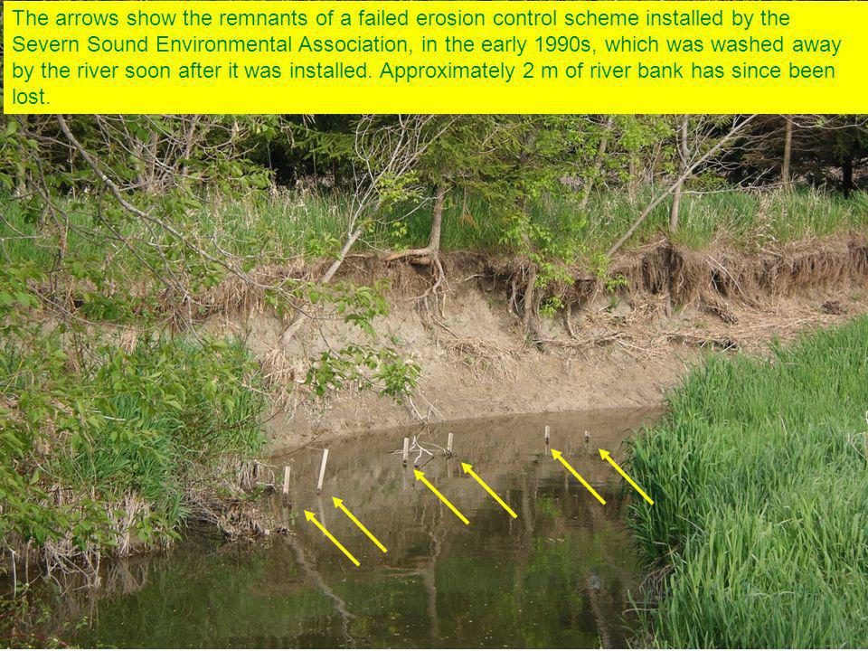 The arrows show the remnants of a failed erosion control scheme installed by the Severn Sound Environmental Association, in the early 1990s, which was washed away by the river soon after it was installed.