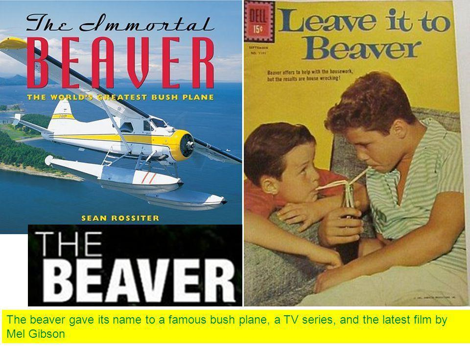 The beaver gave its name to a famous bush plane, a TV series, and the latest film by Mel Gibson