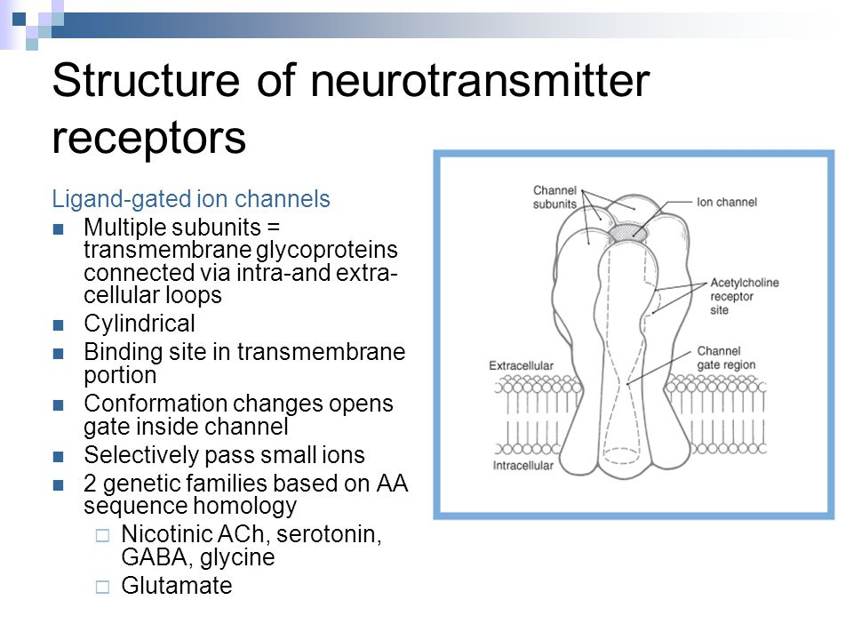 Structure of neurotransmitter receptors Ligand-gated ion channels Multiple subunits = transmembrane glycoproteins connected via intra-and extra- cellular loops Cylindrical Binding site in transmembrane portion Conformation changes opens gate inside channel Selectively pass small ions 2 genetic families based on AA sequence homology  Nicotinic ACh, serotonin, GABA, glycine  Glutamate