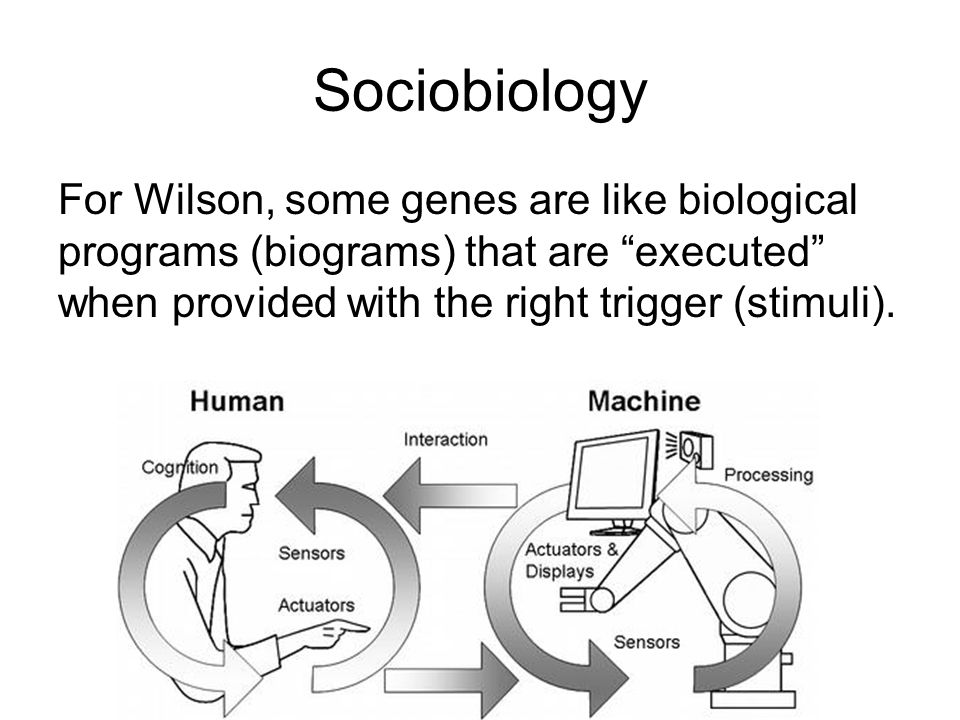 Sociobiology For Wilson, some genes are like biological programs (biograms) that are executed when provided with the right trigger (stimuli).