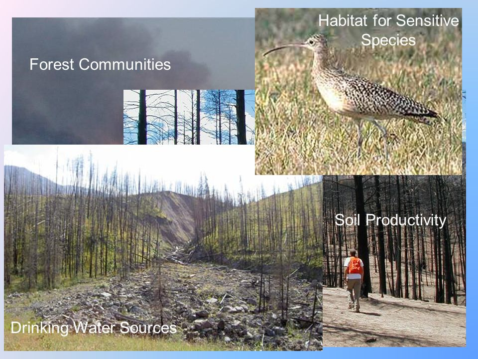 Forest Communities Soil Productivity Drinking Water Sources Habitat for Sensitive Species