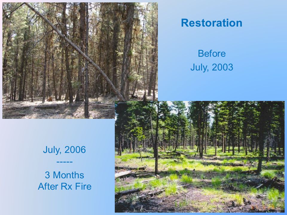 Restoration Before July, 2003 July, 2006 ----- 3 Months After Rx Fire