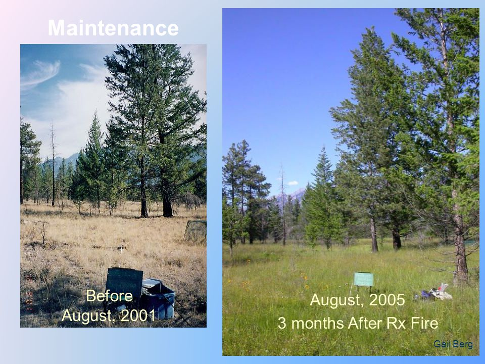 Maintenance Before August, 2001 August, 2005 3 months After Rx Fire Gail Berg