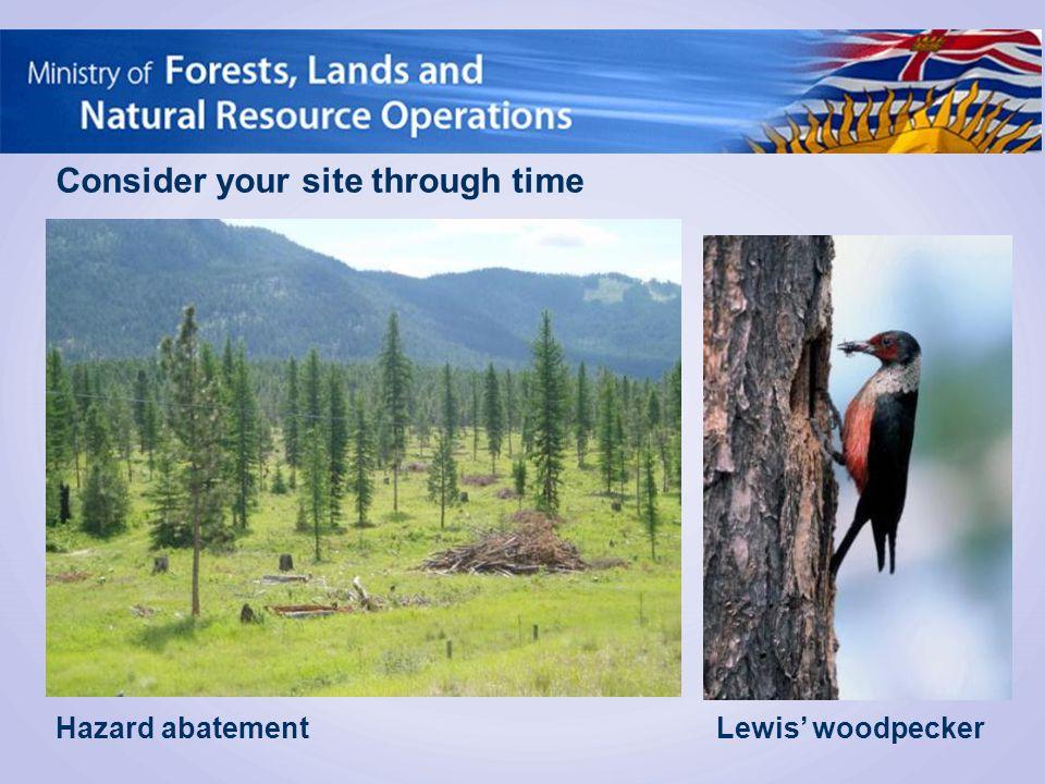 Consider your site through time Lewis' woodpeckerHazard abatement
