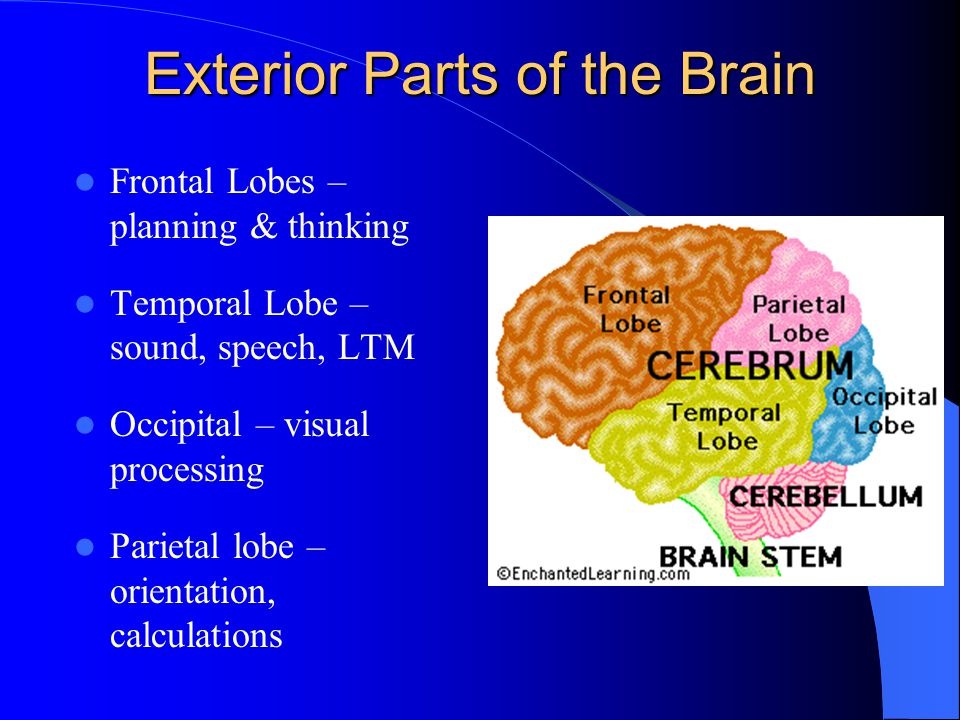 How the Brain Learns – Why it is Important.When do students remember best in a learning episode.