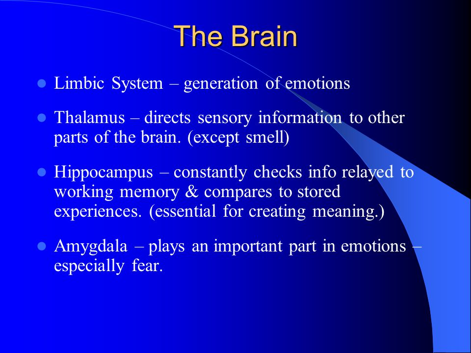 Memory Short term memory: – All of the early steps of temporary memory that lead to stable long term memory Immediate Memory – holds data for 30 seconds Working Memory – limited capacity – conscious activity – captures our focus and demands our attention – occurs in the frontal lobes