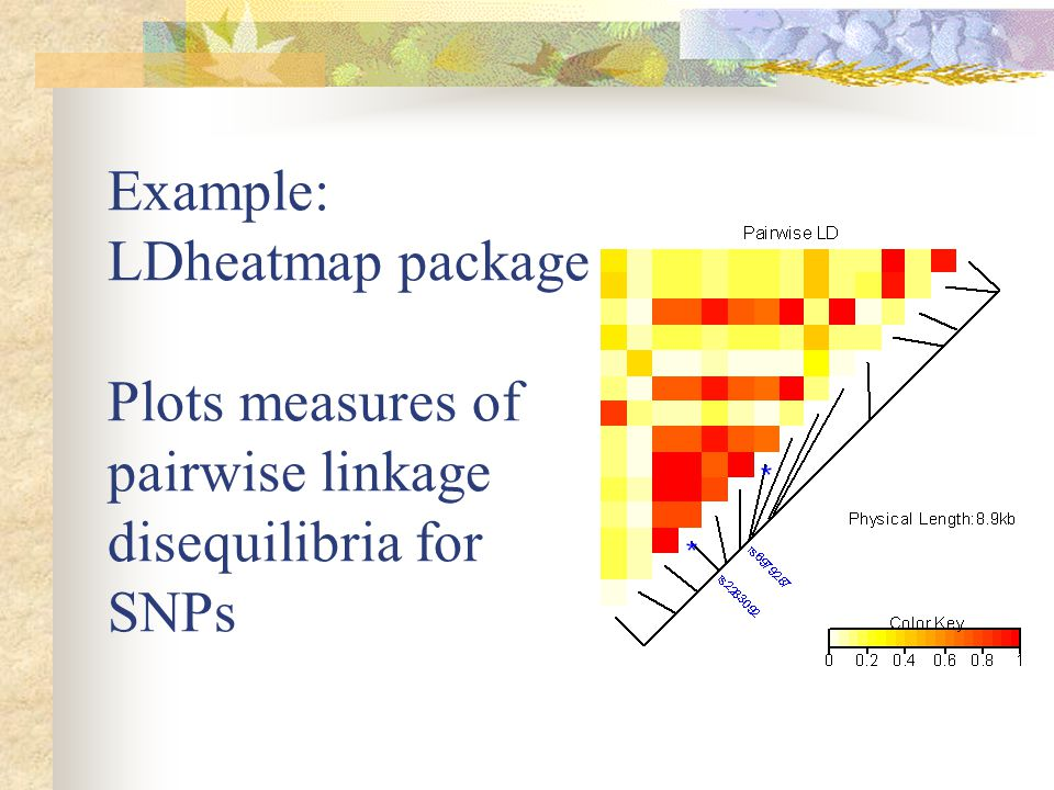 Example: LDheatmap package Plots measures of pairwise linkage disequilibria for SNPs