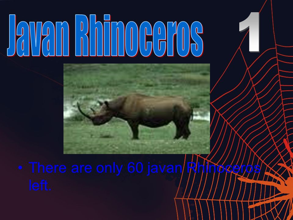 There are only 60 javan Rhinoceros left.