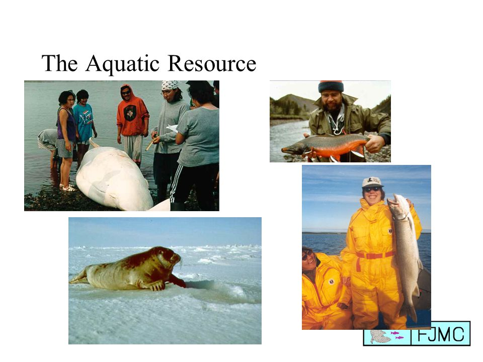 The Aquatic Resource