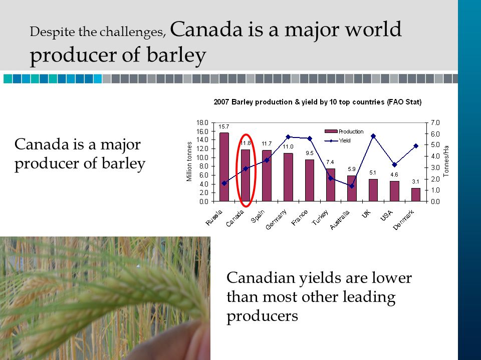 Canadian yields are lower than most other leading producers Canada is a major producer of barley Despite the challenges, Canada is a major world produ