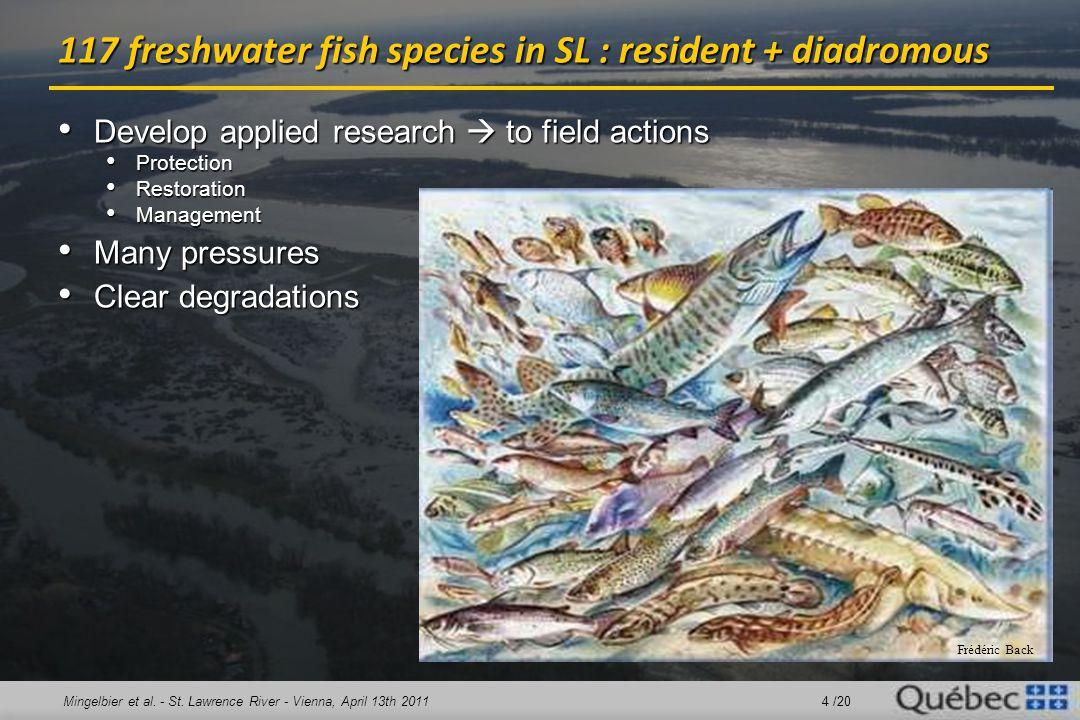 Mingelbier et al. - St. Lawrence River - Vienna, April 13th 2011 4 /20 117 freshwater fish species in SL : resident + diadromous Develop applied resea