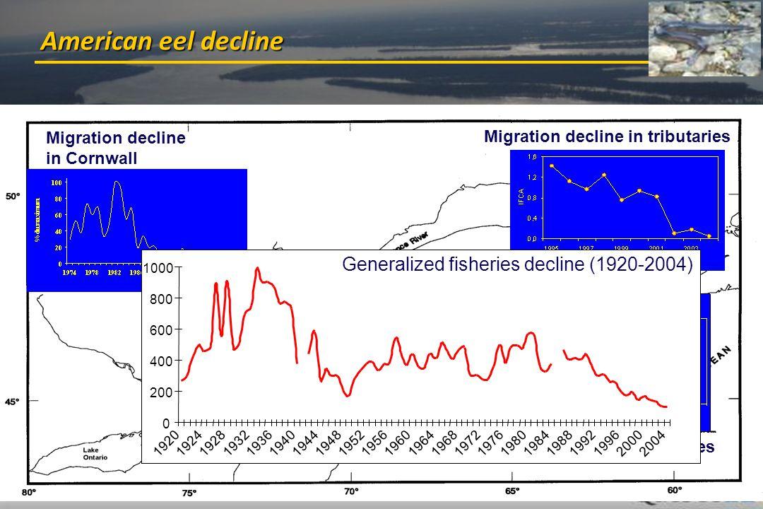 Mingelbier et al. - St. Lawrence River - Vienna, April 13th 2011 6 /20 American eel decline Migration decline in Cornwall Migration decline in tributa