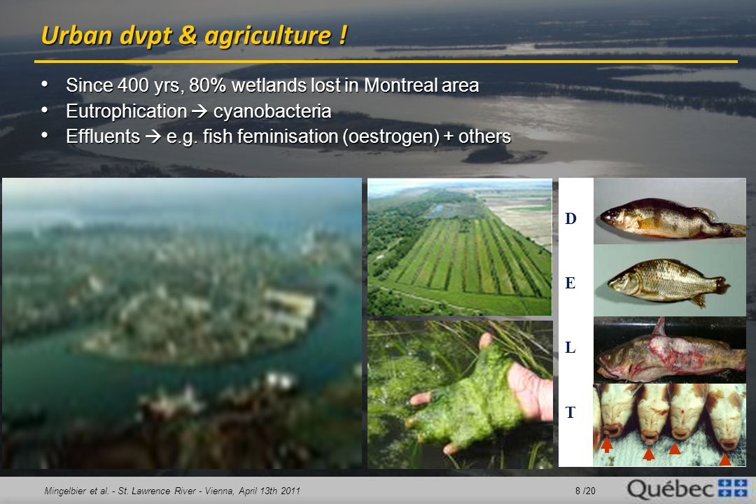 Mingelbier et al. - St. Lawrence River - Vienna, April 13th 2011 8 /20 Urban dvpt & agriculture ! Since 400 yrs, 80% wetlands lost in Montreal area Si