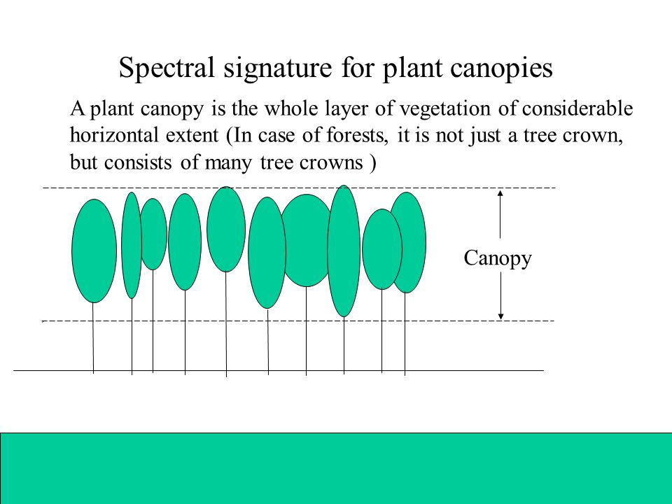 Spectral signature for plant canopies A plant canopy is the whole layer of vegetation of considerable horizontal extent (In case of forests, it is not just a tree crown, but consists of many tree crowns ) Canopy