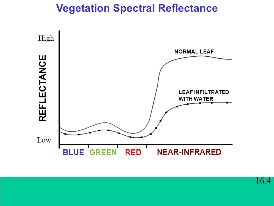 Vegetation Spectral Reflectance BLUEGREEN RED REFLECTANCE Low High NORMAL LEAF LEAF INFILTRATED WITH WATER NEAR-INFRARED 16.4