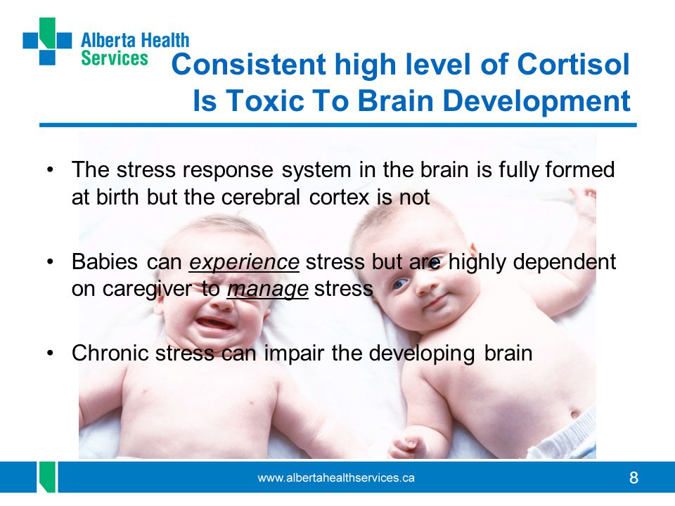 8 Consistent high level of Cortisol Is Toxic To Brain Development The stress response system in the brain is fully formed at birth but the cerebral co