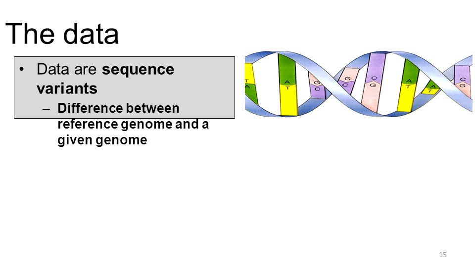 The data Data are sequence variants –Difference between reference genome and a given genome 15
