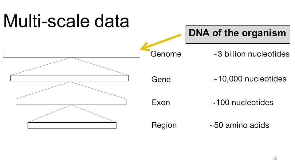 Multi-scale data 18 DNA of the organism