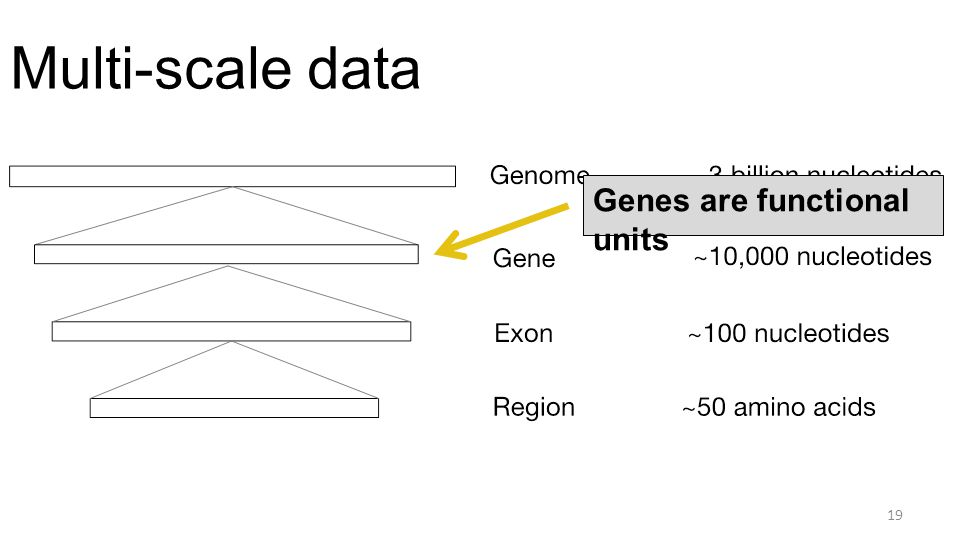 Multi-scale data 19 Genes are functional units
