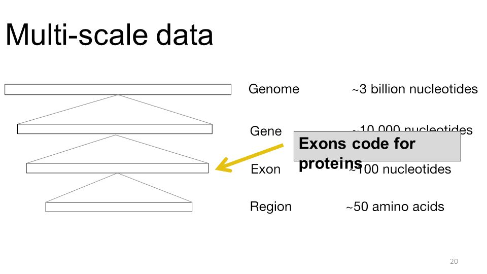 Multi-scale data 20 Exons code for proteins