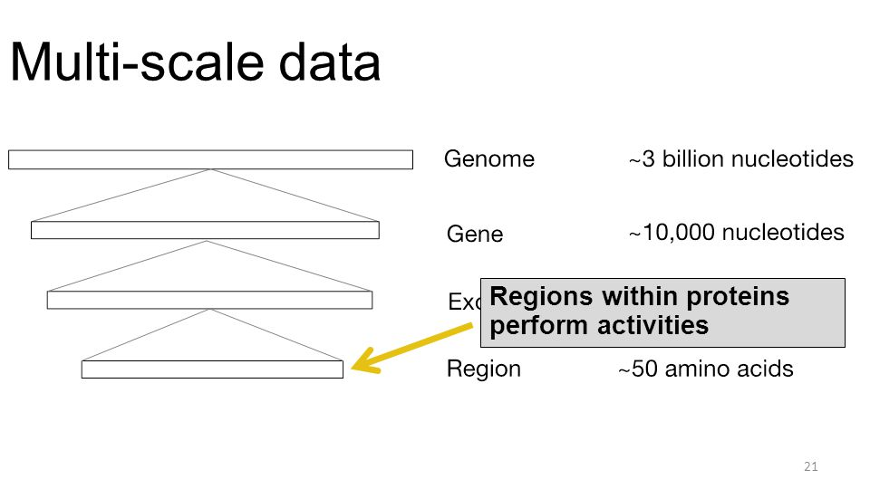 Multi-scale data 21 Regions within proteins perform activities