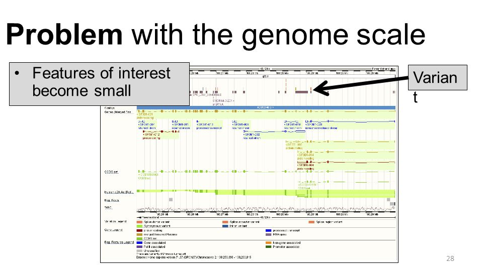 Problem with the genome scale 28 Features of interest become small Varian t