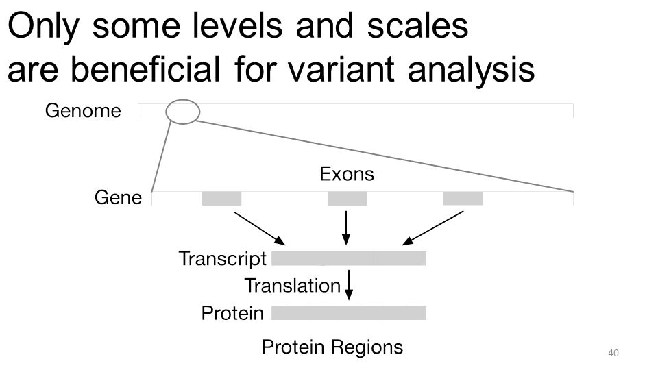 Only some levels and scales are beneficial for variant analysis 40