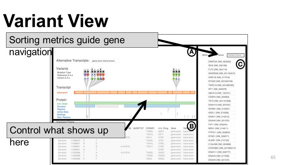 Variant View 65 Sorting metrics guide gene navigation Control what shows up here