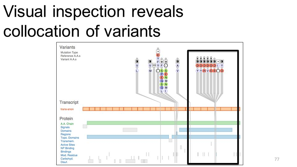 Visual inspection reveals collocation of variants 77