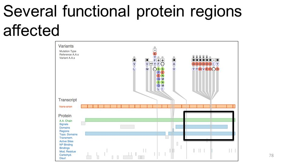 Several functional protein regions affected 78