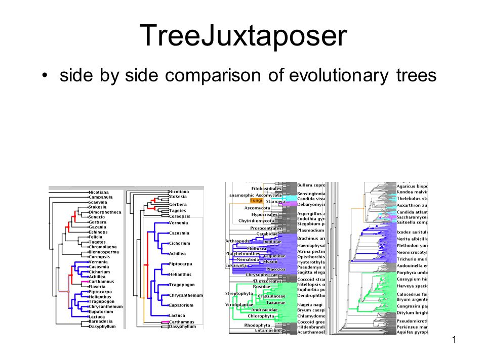 1 TreeJuxtaposer side by side comparison of evolutionary trees
