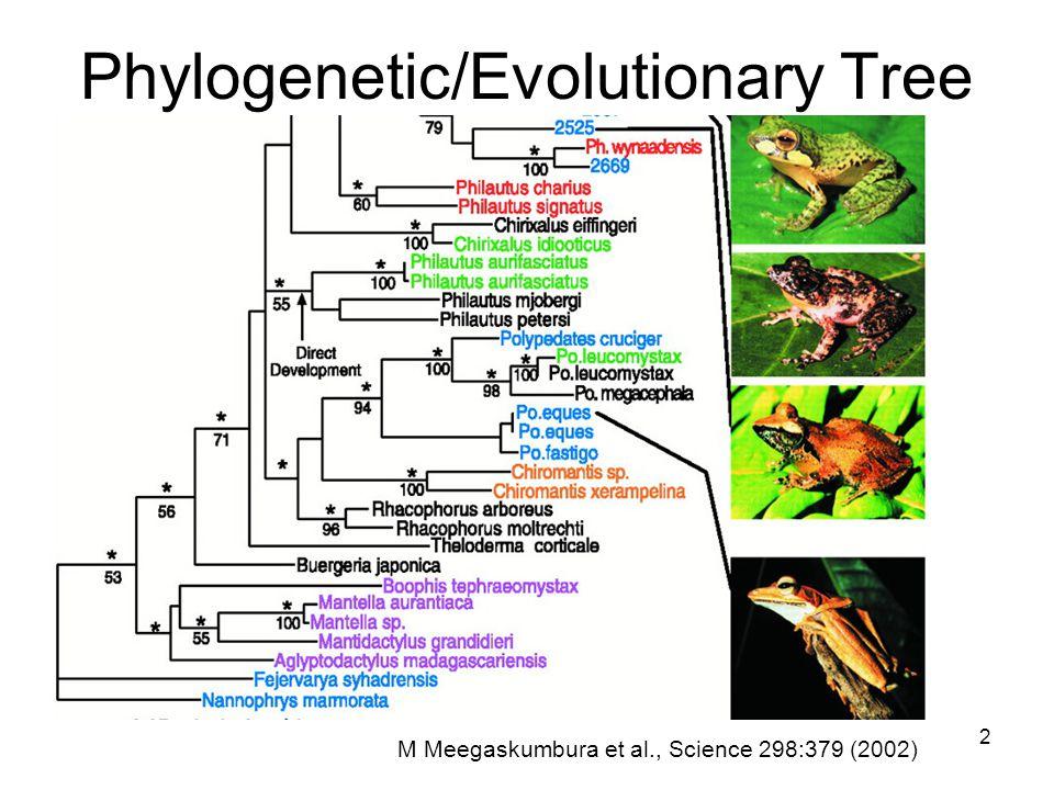 2 Phylogenetic/Evolutionary Tree M Meegaskumbura et al., Science 298:379 (2002)
