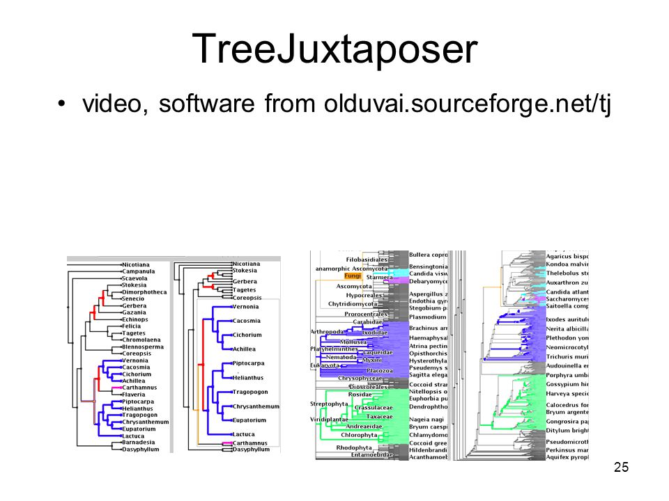 25 TreeJuxtaposer video, software from olduvai.sourceforge.net/tj