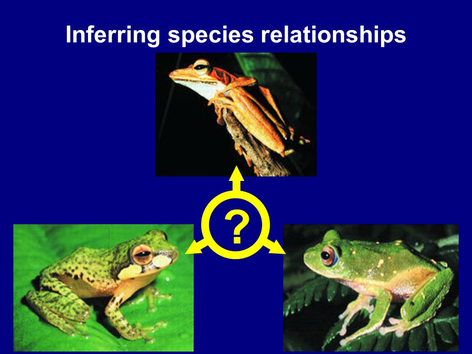 3 Inferring species relationships ?