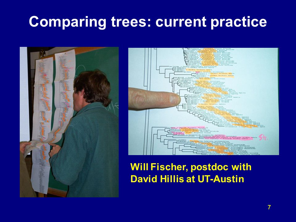 7 Comparing trees: current practice Will Fischer, postdoc with David Hillis at UT-Austin