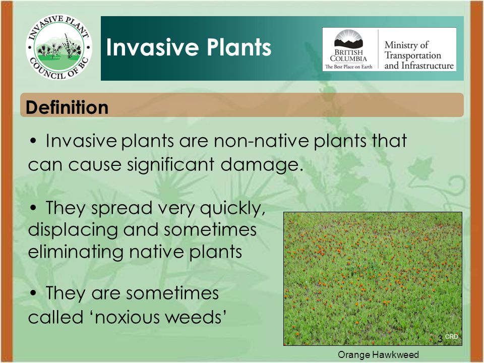 3 Definition Invasive Plants Invasive plants are non-native plants that can cause significant damage.