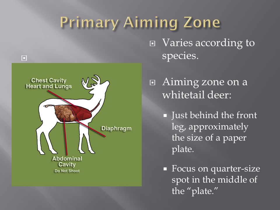   Varies according to species.  Aiming zone on a whitetail deer:  Just behind the front leg, approximately the size of a paper plate.  Focus on q