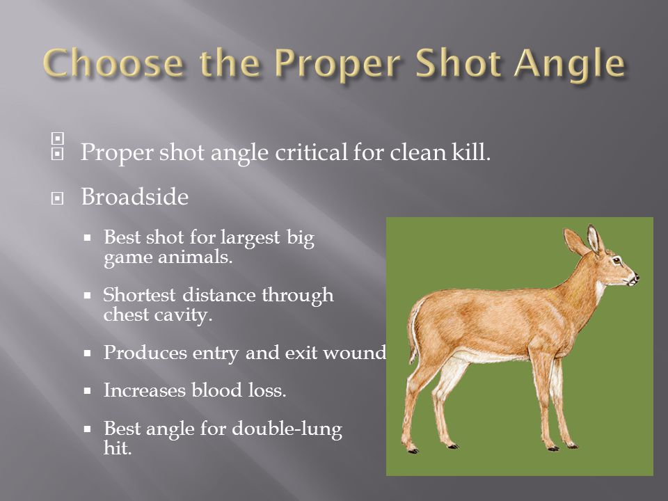   Proper shot angle critical for clean kill.  Broadside  Best shot for largest big game animals.  Shortest distance through chest cavity.  Produ