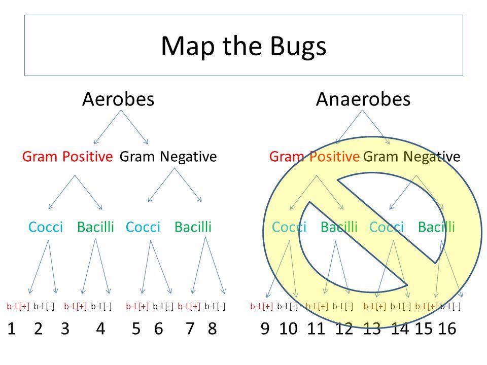 AerobesAnaerobes Gram PositiveGram Negative CocciBacilliCocciBacilliCocciBacilliCocciBacilli b-L[+] b-L[-] b-L[+] b-L[-] b-L[+] b-L[-] b-L[+] b-L[-]b-L[+] b-L[-] b-L[+] b-L[-] b-L[+] b-L[-] b-L[+] b-L[-] 1 2 3 4 5 6 7 8 9 10 11 12 13 14 15 16 Map the Bugs