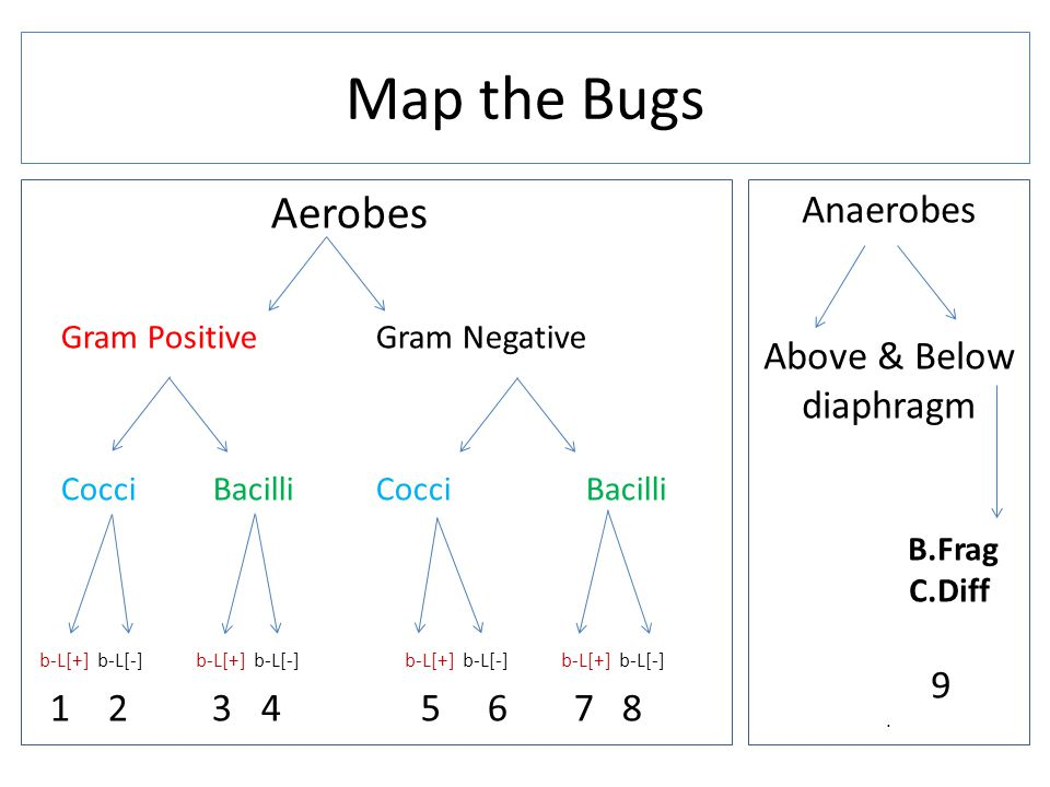 Aerobes Gram Positive Gram Negative Cocci Bacilli b-L[+] b-L[-] b-L[+] b-L[-] b-L[+] b-L[-] b-L[+] b-L[-] 1 2 3 4 5 6 7 8 Map the Bugs Anaerobes Above & Below diaphragm B.Frag C.Diff 9.